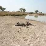 Massacre de la faune au Bénin: le dernier Éden menacé