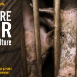 Cadences infernales, castration, claustration – L'enfer productiviste des cochons (Isabelle Saporta)