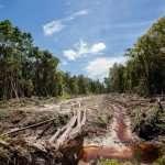 Il ne reste que deux véritables forêts dans le monde & le boom des infrastructures menace le restant de sauvage