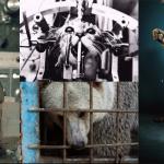 La civilisation & les animaux non-humains (par Armand Farrachi)