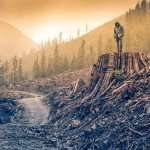 Le Grand Deuil: comment faire face à la perte de notre monde (Per Espen Stoknes)
