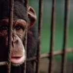 Le cauchemar des zoos (par Derrick Jensen)