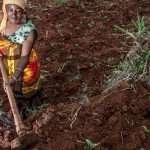 Les femmes et la biodiversité nourrissent le monde, pas les corporations et les OGM (Vandana Shiva)
