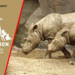 La 6ème extinction de masse – comment l'être humain détruit la vie (Elizabeth Kolbert)