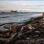 Marée noire dans le Pacifique Nord (Sakhaline)