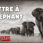 Lettre à l'éléphant (par Romain Gary)
