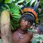 Permaculture, agroécologie, jardins-forêts: des pratiques millénaires, l'exemple des Yanomami (par Thierry Sallantin)