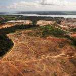 """Les forêts du monde seront détruites si nous ne disons pas """"non"""" (par Bill Laurance)"""
