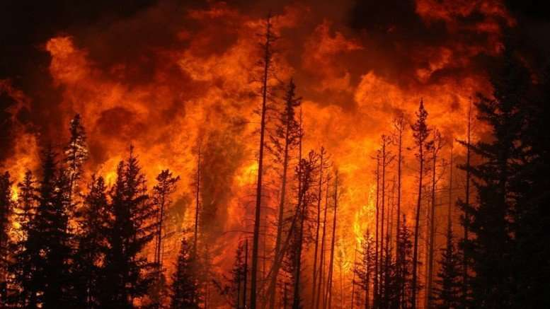 Plus de 522 000 hectares de forêts ont récemment brûlé (en date du 22 mai 2016) dans l'incendie de Fort McMurray au Canada, encore en cours.