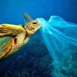 Journée mondiale des Océans, 2016: plus de poisons, moins de poissons…