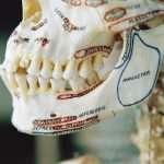 Avant la civilisation: peu de caries, des mâchoires parfaitement adaptées aux dents et des os plus solides