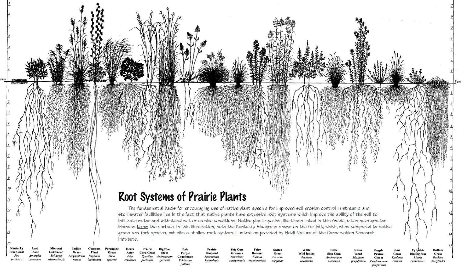 prairierootsystems-1