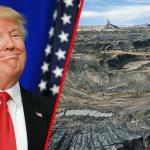 Trump, l'arbre qui cache la forêt (ou, plutôt, qui cache la déforestation)