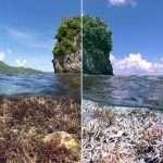 La mort du corail, les documentaires écolos, et le narcissisme subventionné (par Nicolas Casaux)