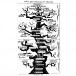 La civilisation, le suprémacisme humain et l'écologie (par Nicolas Casaux)