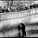 Zoos: Non à l'imposture! (Par Jean-Claude Nouët)