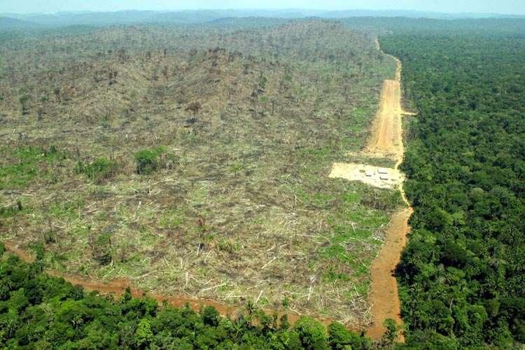 deforestation01