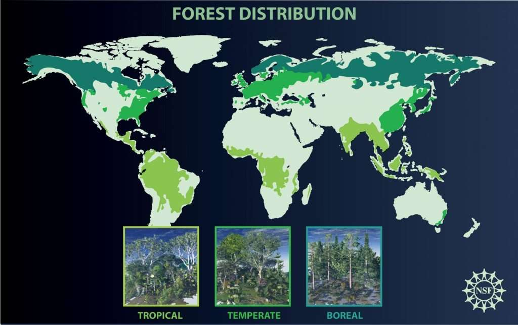 Couvert forestier mondial. Credit: Nicolle Rager Fuller, National Science Foundation.